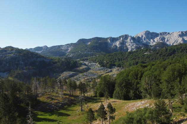 Montanske jelovo-bukove i subalpske javoro-bukove šume Bijele gore